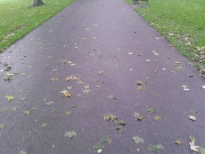 si ajung in parcul augarten, cu micul sau covor de asfalt si frunze